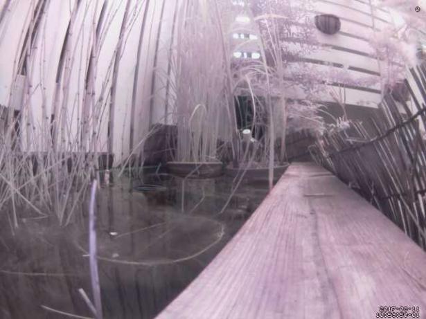 ビオトープ池監視画面